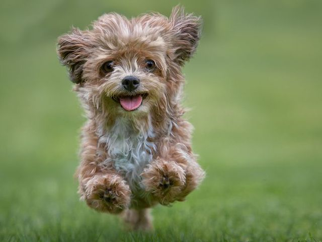Well-Trained Dogs Are Happy Dogs